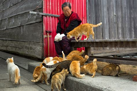 aoshima cat island japan s cat island a visit to aoshima where cats outnumber people by six to one