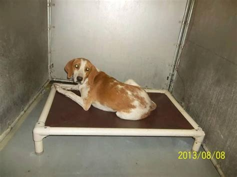 shelters in ohio animal shelters in columbus ohio breeds picture