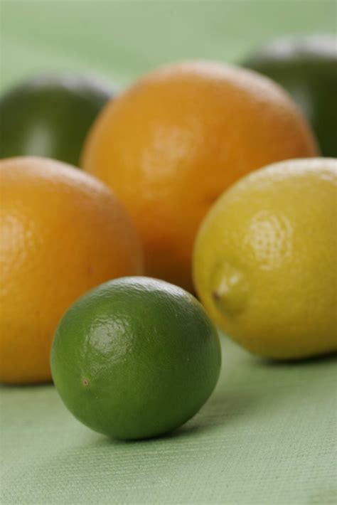 Benihbibitbiji Buah Jeruk Lemon Cui mengenal jenis manfaat jeruk lebih dekat