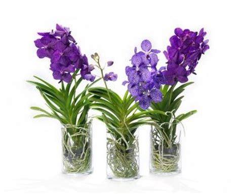 l orchid 233 e vanda la plus des orchid 233 es 192 lire