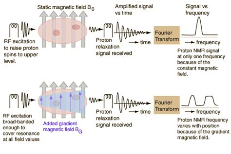 how does proton nmr work physiology physics woven understanding the basic