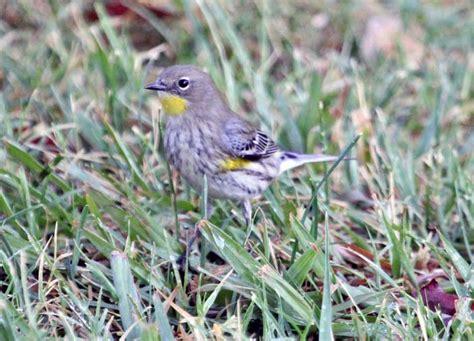 yrwa sb 10 13 san fernando valley audubon society