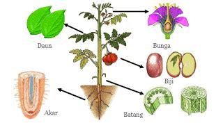 bagian bagian tumbuhan beserta fungsinya iwan ridwan