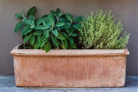 How To Plant Herbs In Planter Boxes by How To Grow Free Food In Window Boxes What To Grow Tips