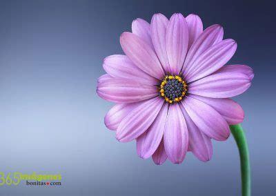imagenes flores extraordinarias fondos de pantalla gratis en hd 365 im 225 genes bonitas