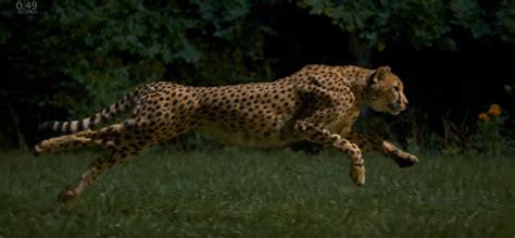 jaguar and cheetah difference between cheetah and jaguar samsung galaxy