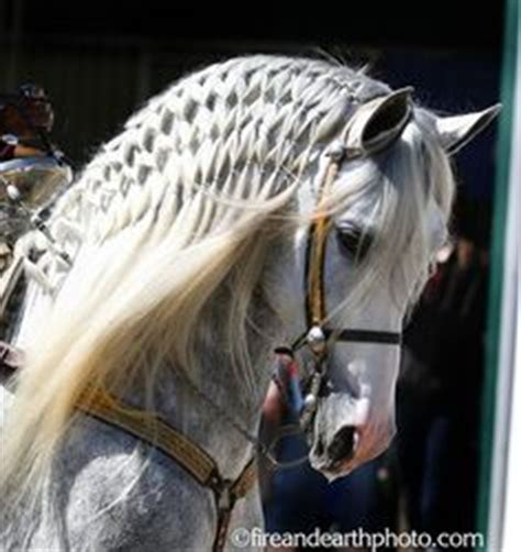 hairstyles for horses 1000 images about horse hair styles on pinterest horses