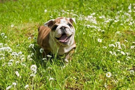 allergy free dogs allergy free dogs 5 breeds that won t sneeze on you