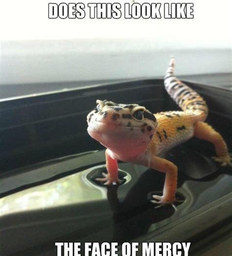 Lot Lizard Meme - 17 best images about l g memes on pinterest funny