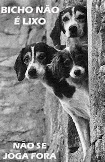 Amicão amigos dos animais: Carta de um cão abandonado para