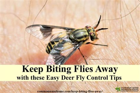 deer fly and deterrent tips to keep biting flies away