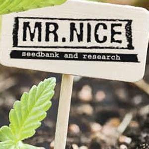 banche semi cannabis banche di semi di cannabis zativo