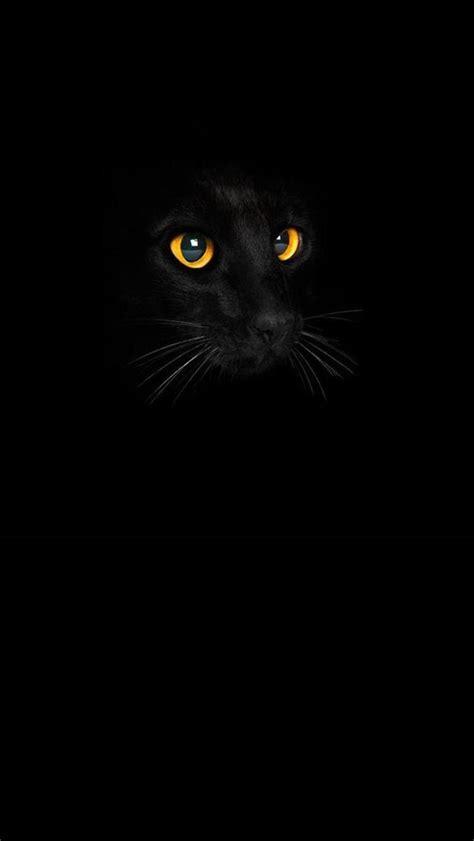 pet mobile wallpapers cat desktop hd wallpapers black cat wallpaper 51 wallpapers hd wallpapers