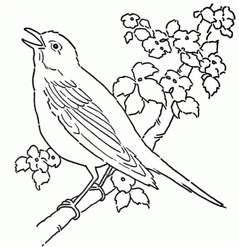 coloring pages of birds singing canary coloring page az coloring pages