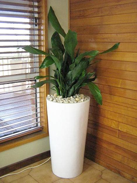 modern houseplants green ideas for your home interiors decorating with