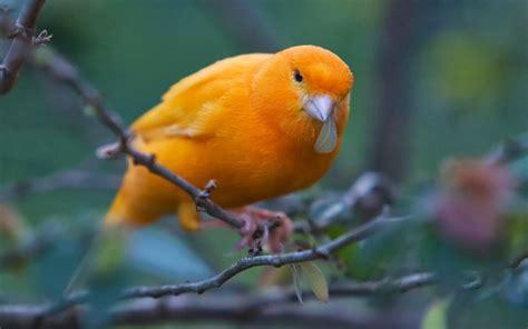 Obat Cacing Burung Kenari kenari 2014 cocok untuk mastera obat serangga kecoa dan semut