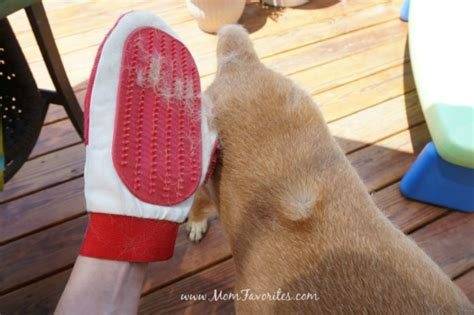 9 Tips On Keeping Your Outside Pet Safe From The Cold by 10 Tips For Pets During The Days Of Summer Favorites