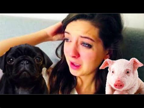nala the pug is zoella a hypocrite nala pug vs pig