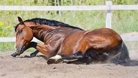 mauke beim pferd tiergesundde