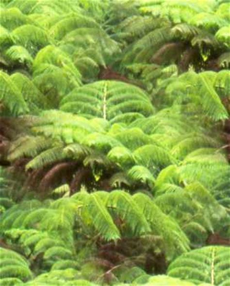 types of plants in a tropical rainforest pictures rainforest plants tropical rainforest plants