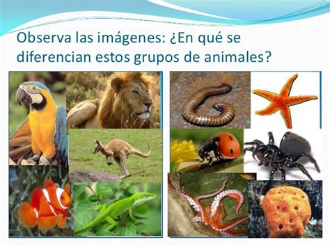 imagenes animales que se arrastran animales con hueso y animales sin huesos