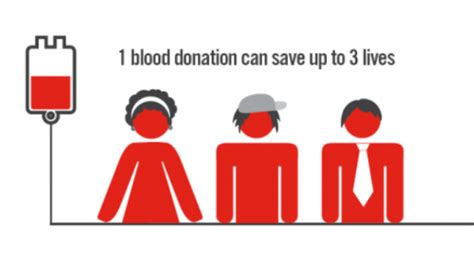 Does Donating Blood Help Detox by 10 Blood Donation Facts Thrombocytes