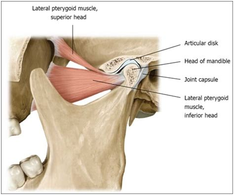 tmj diagram temporomandibular joint tmj tao