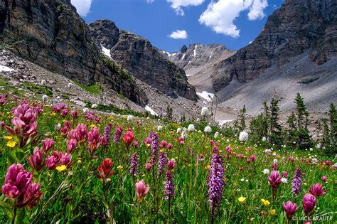 Flower Mountain ogalalla flowers indian peaks wilderness colorado