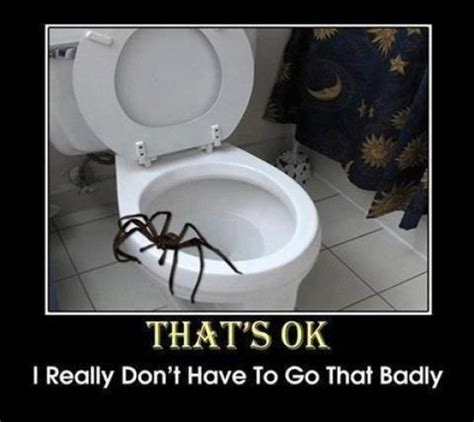 Shower Spider Meme - if you re scared of spiders then give australia a miss 23