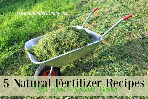 5 Natural Fertilizer Recipes For Your Vegetable Garden Vegetable Garden Fertilizer Recommendations