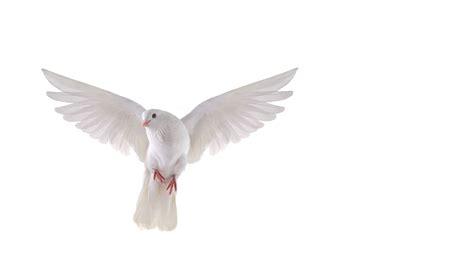 doves more photos