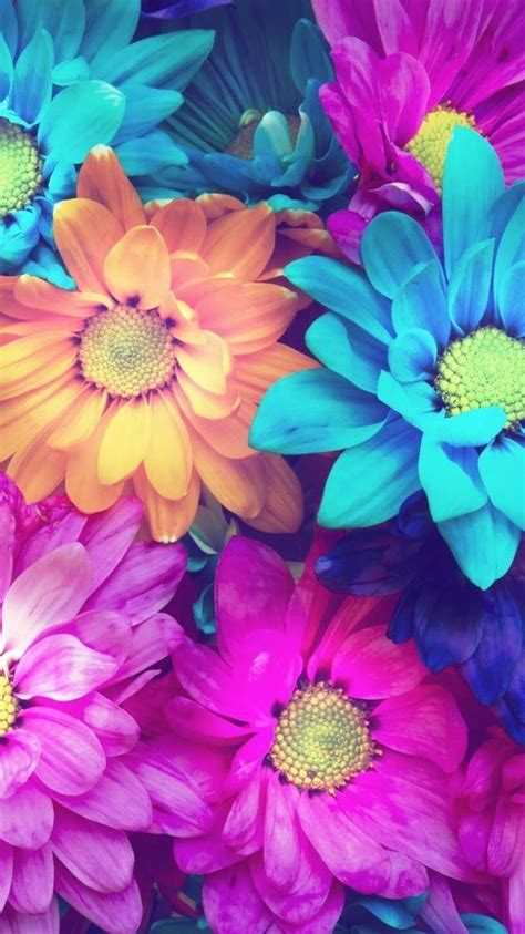 Pretty Colorful by Pretty Flowers Backgrounds Colorful Www Pixshark