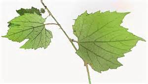 stuffed grape leaves playful bookbinding and paper works