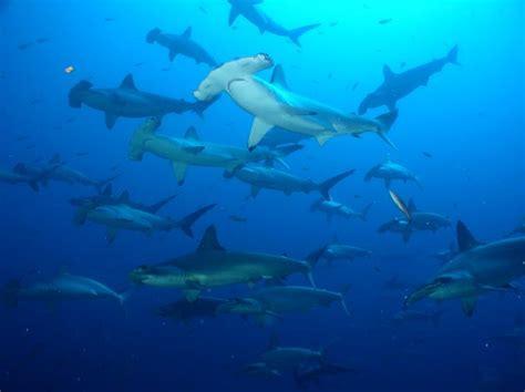 dive galapagos galapagos aggressor 2 liveaboard diving dive resorts