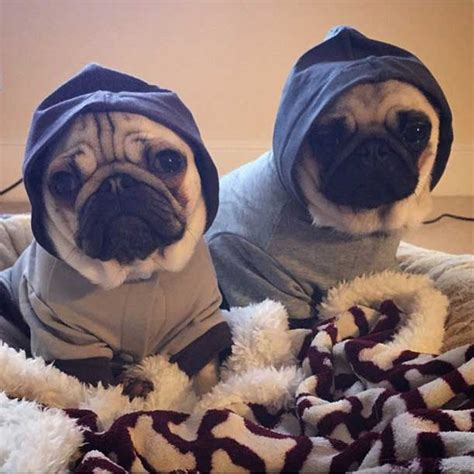 dantdm ellie the pug 5 reasons why i following superstar daniel middleton