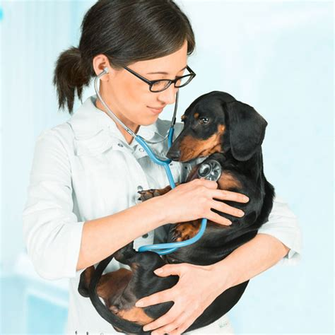 congestive failure dogs breeds congestive failure in dogs breeds picture
