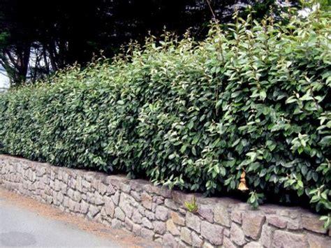 Garten Sichtschutz Ideen 1517 73 besten garten bilder auf garten terrasse