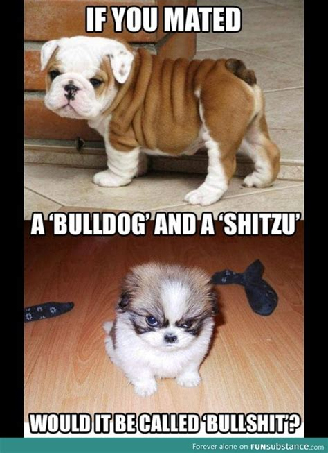 shih tzu cross bulldog a bulldog and a shitzu mixed what would it be called funsubstance