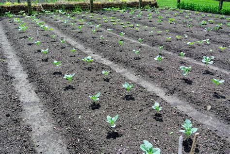 When Should I Plant A Vegetable Garden When Should I Plant My Vegetable Garden Talentneeds