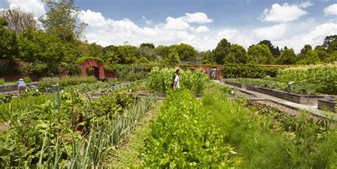 image gallery kitchengarden hamilton gardens kitchen garden