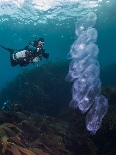 best diver the best scuba diving in tasmania scuba diver
