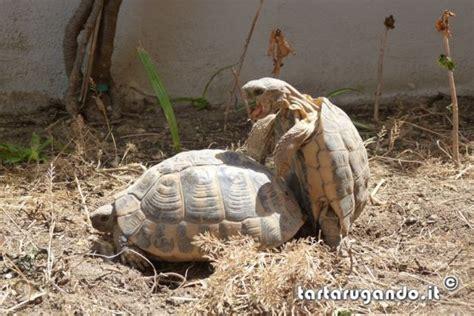 lade per rettili tartarugando illuminazione per rettili tartarugando