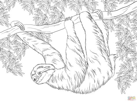 sloth coloring page three toed sloth hanging on tree coloring page free