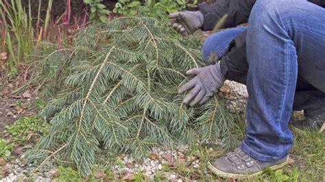 abdeckung pflanzen winter abdeckung pflanzen winter endspurt im gr nen garten auf