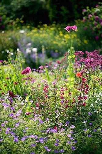 garten gestalten wildblumen 37617 garden wildblumen g 228 rten und wiese