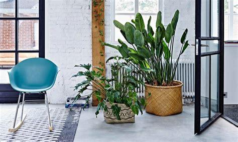 Planten In Huis Trends by Planten In Huis Trends Geweldig Woontrends Interieur