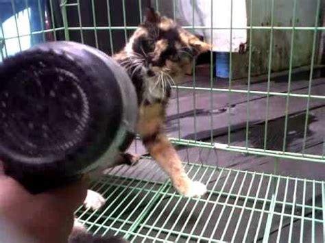 Hair Dryer Sellery salon kucing doovi