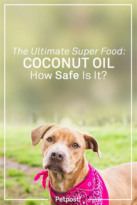 is coconut safe for dogs petpost news information for happy dogs petpost