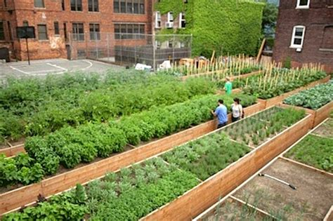 backyard agriculture top 5 urban farms in new york city city farmer news