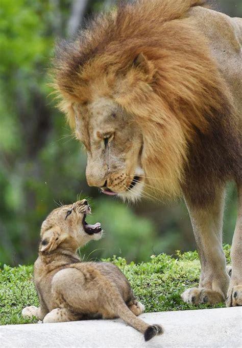 zoo miami babies south dade news leader news